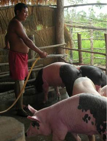 HUOTH Mab tends to his pigs